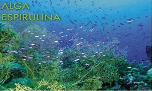 Fit Capsula Reductora FG Bolivia 2 Alga Espirulina